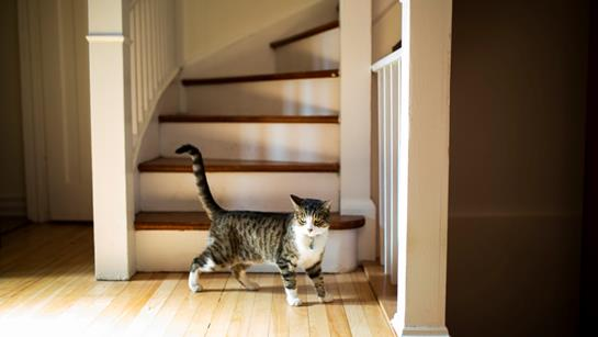 Cat In Front Of Staircase